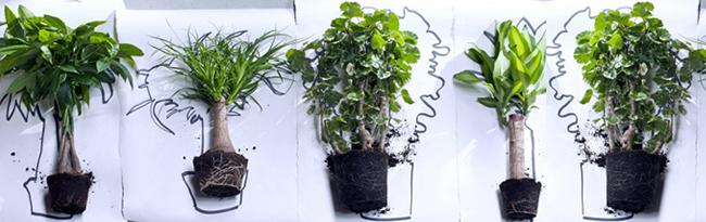 Groothandel kamerplanten
